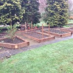Raised Veg Beds